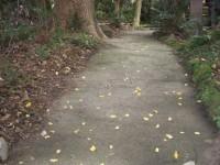 駐車場から境内への坂道(幅170cm、傾斜14度)