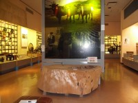 展示室の通路幅130cm~200cm
